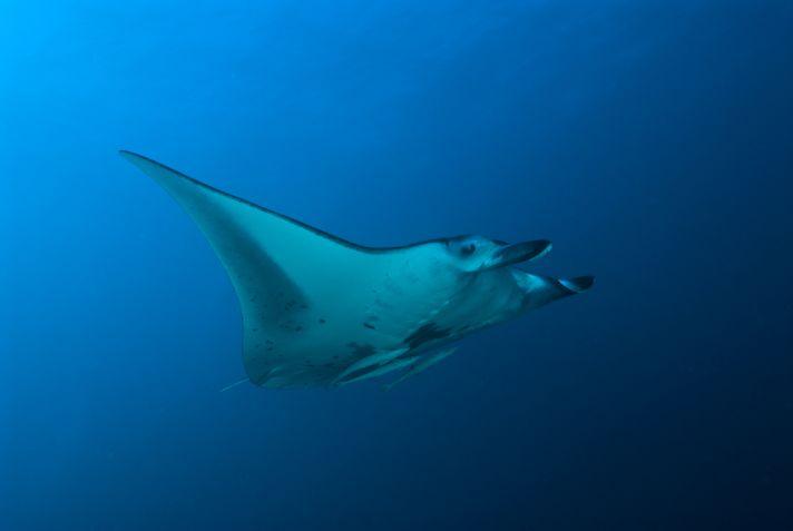 Maldivas 2010