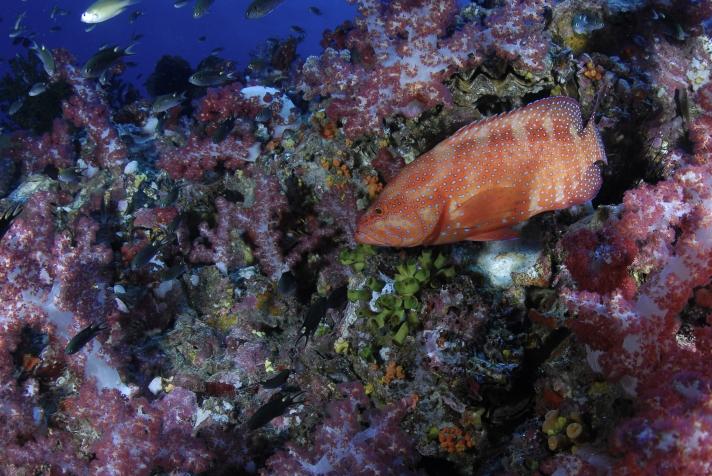 Richelieu 2009